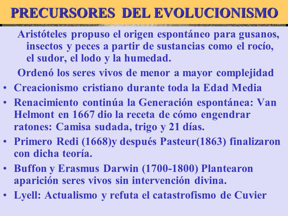 Buffon PRECURSORES DEL EVOLUCIONISMO Aristóteles propuso el origen espontáneo para gusanos, insectos y peces a partir de sustancias como el rocío, el