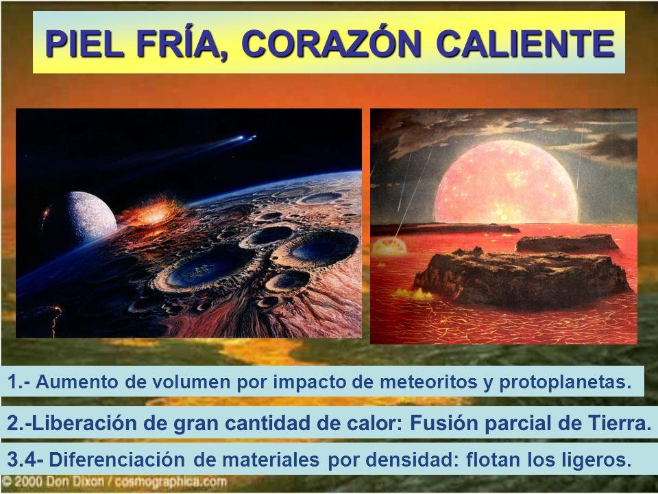 PIEL FRÍA, CORAZÓN CALIENTE 2.-Liberación de gran cantidad de calor: Fusión parcial de Tierra. 3.4- Diferenciación de materiales por densidad: flotan