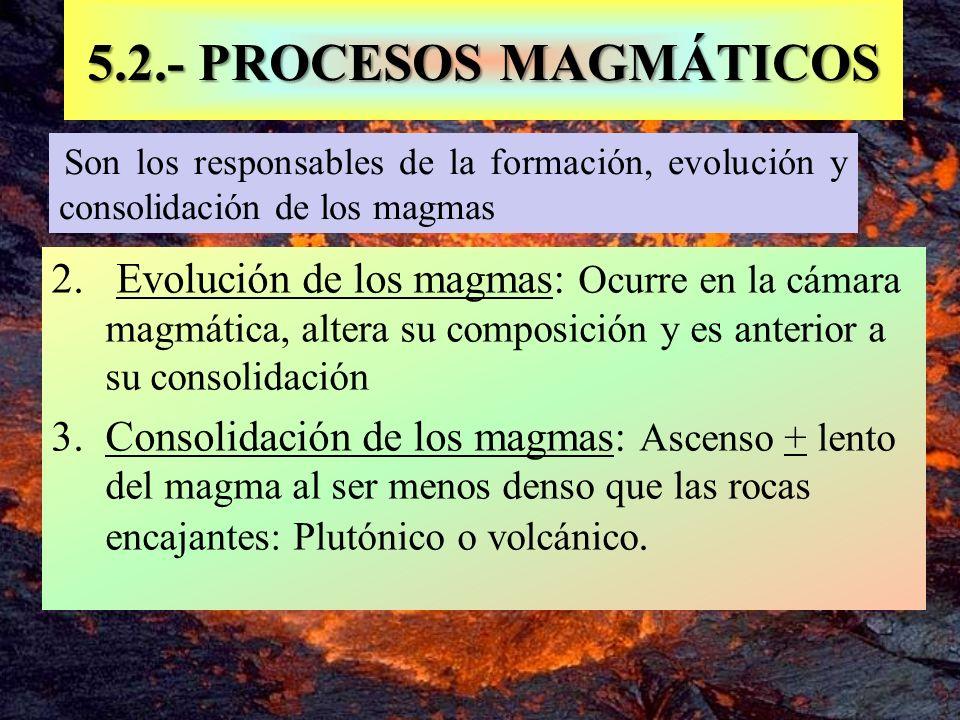 Son los responsables de la formación, evolución y consolidación de los magmas 5.2.- PROCESOS MAGMÁTICOS 2. Evolución de los magmas: Ocurre en la cámar