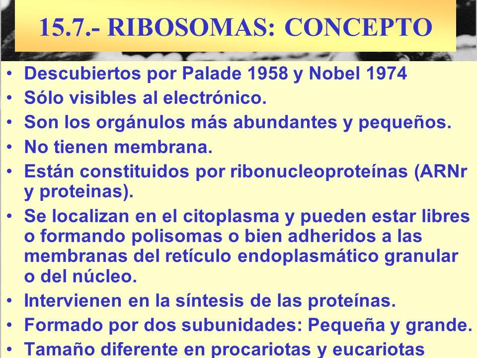 Descubiertos por Palade 1958 y Nobel 1974 Sólo visibles al electrónico. Son los orgánulos más abundantes y pequeños. No tienen membrana. Están constit