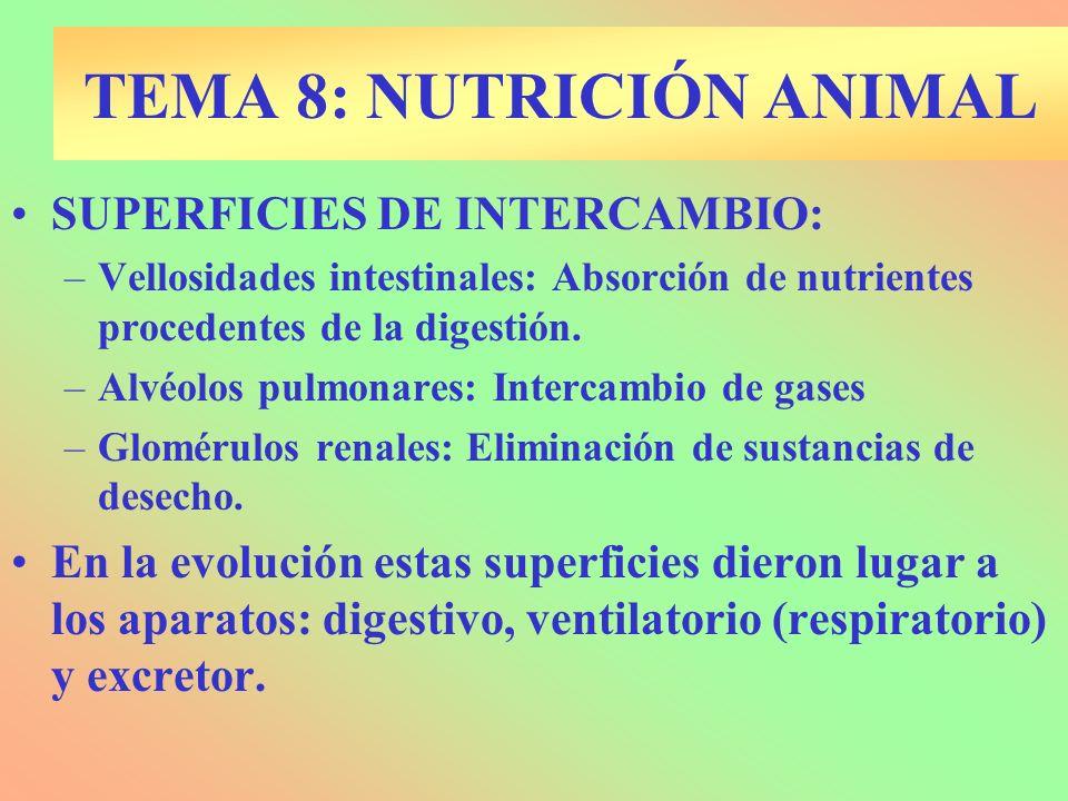 CAPTACIÓN DE NUTRIENTES Absorción: Parásitos.Endocitosis: Esponjas.