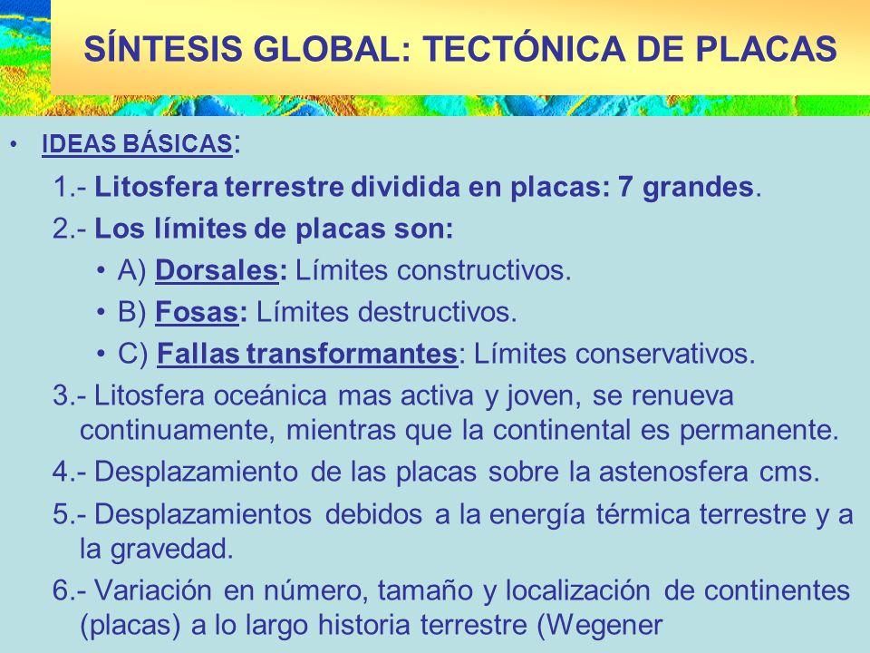 SÍNTESIS GLOBAL: TECTÓNICA DE PLACAS IDEAS BÁSICAS : 1.- Litosfera terrestre dividida en placas: 7 grandes. 2.- Los límites de placas son: A) Dorsales