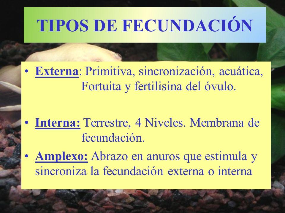 TIPOS DE FECUNDACIÓN Externa: Primitiva, sincronización, acuática, Fortuita y fertilisina del óvulo. Interna: Terrestre, 4 Niveles. Membrana de fecund