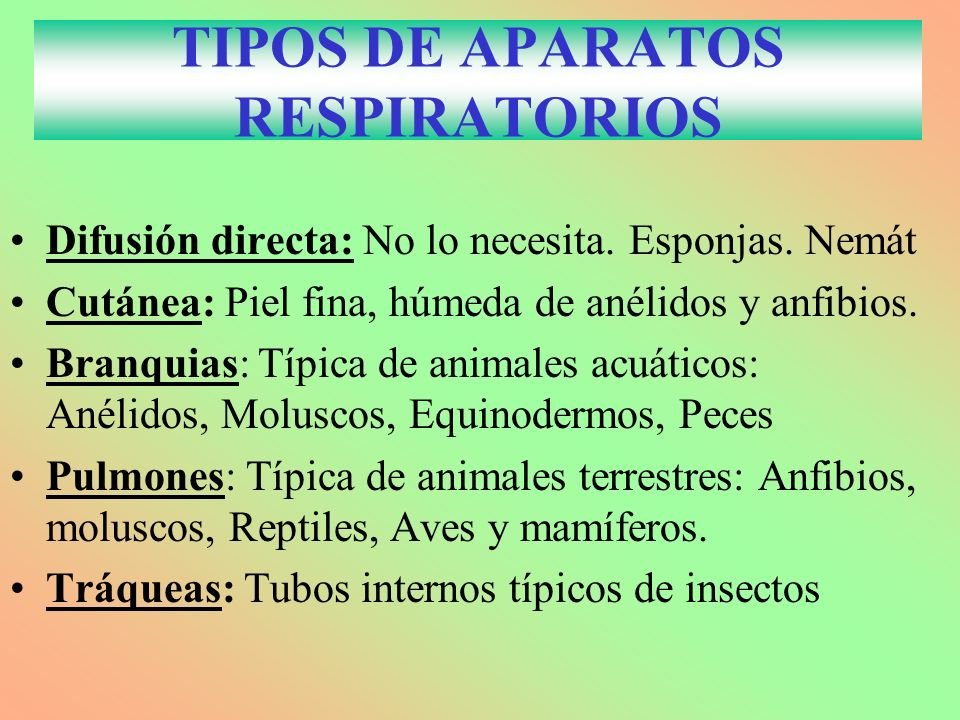 TIPOS DE APARATOS RESPIRATORIOS Difusión directa: No lo necesita. Esponjas. Nemát Cutánea: Piel fina, húmeda de anélidos y anfibios. Branquias: Típica