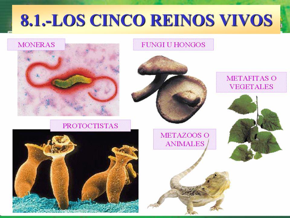 8.1.-LOS CINCO REINOS VIVOS