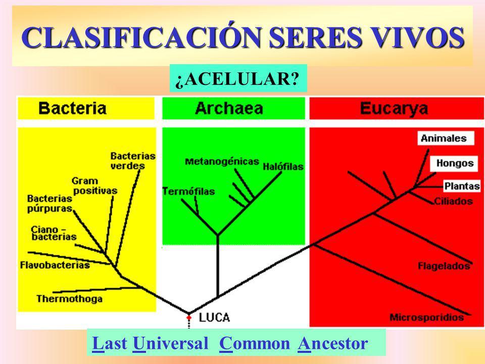 CLASIFICACIÓN SERES VIVOS Last Universal Common Ancestor ¿ACELULAR?