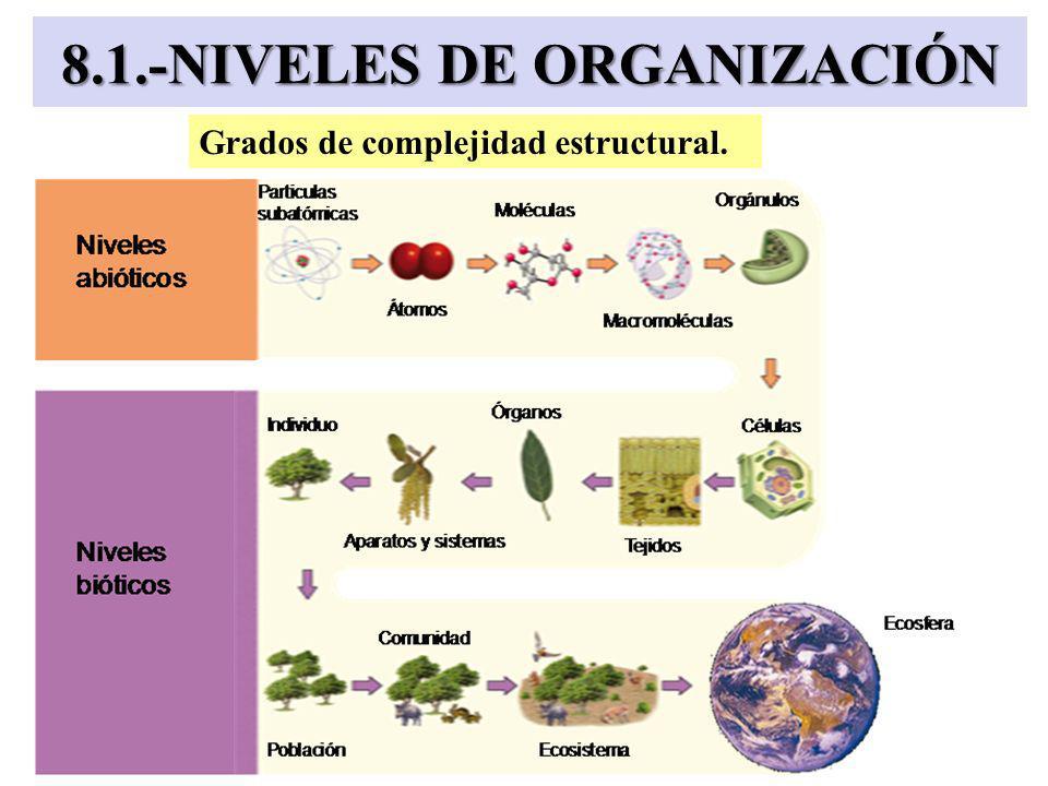 8.1.-NIVELES DE ORGANIZACIÓN Grados de complejidad estructural.