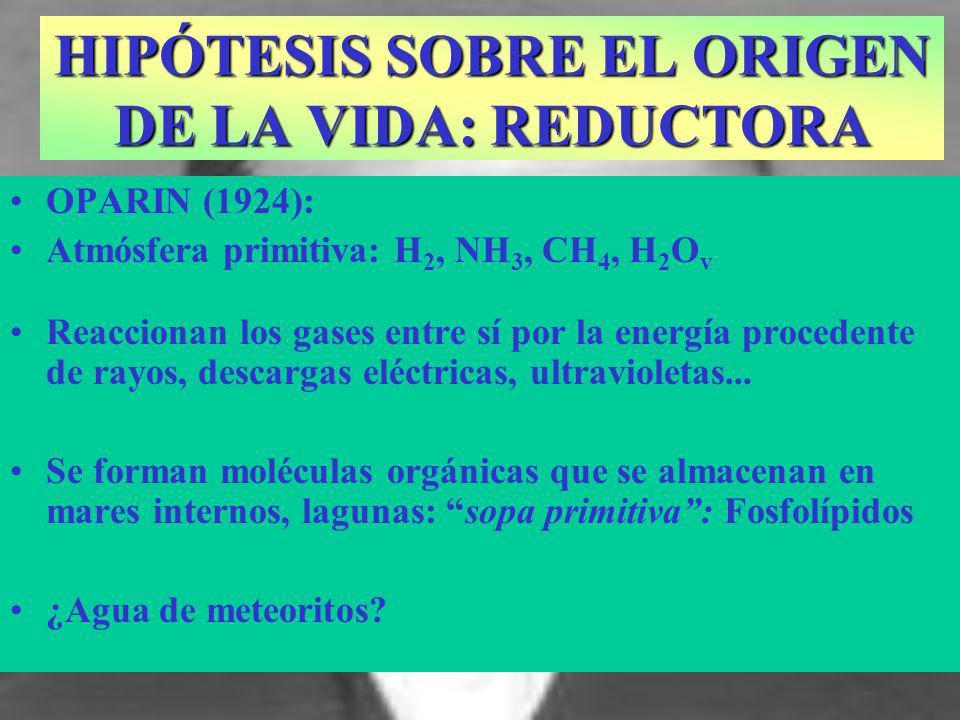 OPARIN (1924): Atmósfera primitiva: H 2, NH 3, CH 4, H 2 O v Reaccionan los gases entre sí por la energía procedente de rayos, descargas eléctricas, u