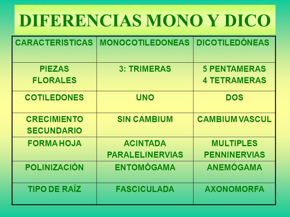 DIFERENCIAS MONO Y DICO CARACTERISTICASMONOCOTILEDONEASDICOTILEDÓNEAS PIEZAS FLORALES 3: TRIMERAS5 PENTAMERAS 4 TETRAMERAS COTILEDONESUNODOS CRECIMIEN