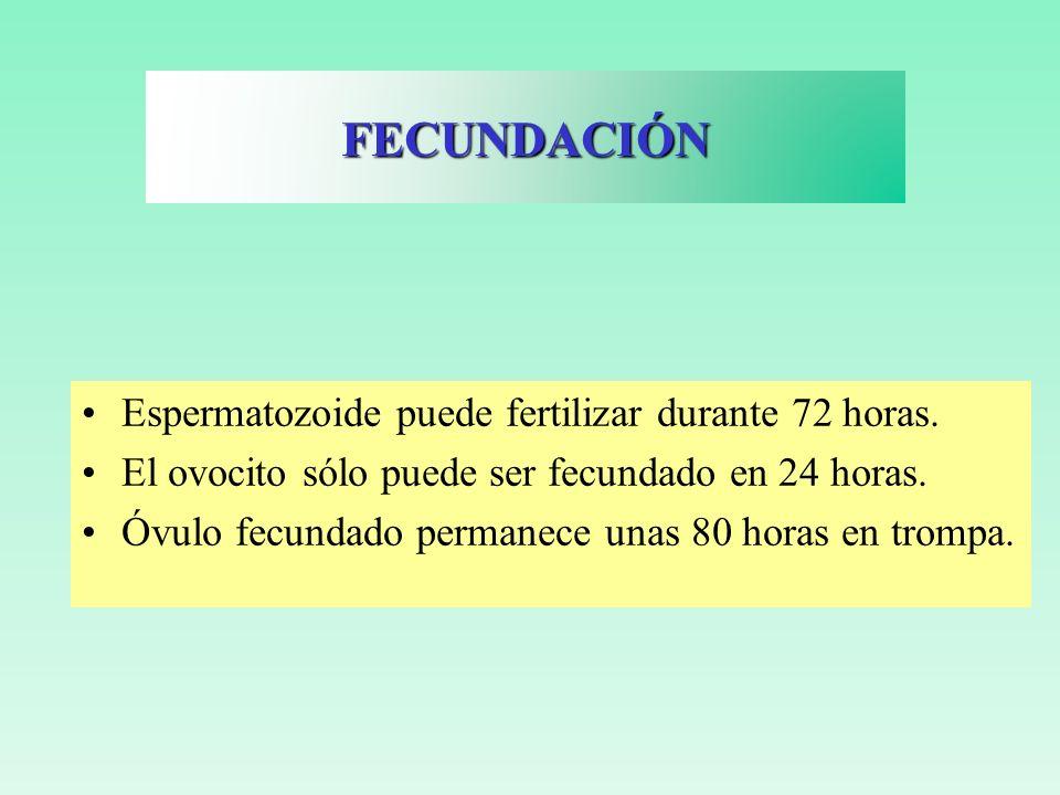 Movimiento celular y plegamiento celular Se forman al principio dos hojas embrionarias: –Ectodermo –Endodermo Después se formará una tercera: Mesodermo GÁSTRULACIÓN