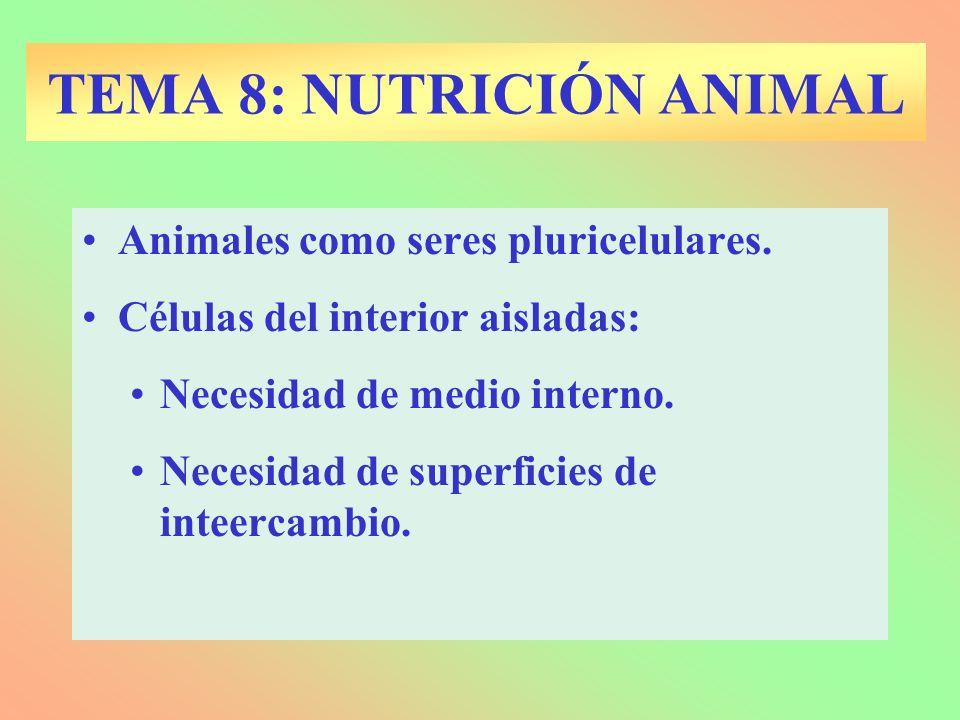 Animales como seres pluricelulares.Células del interior aisladas: Necesidad de medio interno.