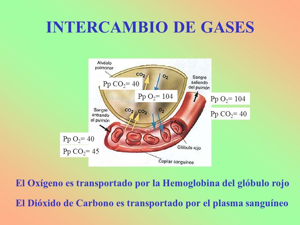 Pp O 2 = 104 Pp CO 2 = 40 Pp O 2 = 104 Pp CO 2 = 45 Pp O 2 = 40 Pp CO 2 = 40 El Oxígeno es transportado por la Hemoglobina del glóbulo rojo El Dióxido de Carbono es transportado por el plasma sanguíneo INTERCAMBIO DE GASES