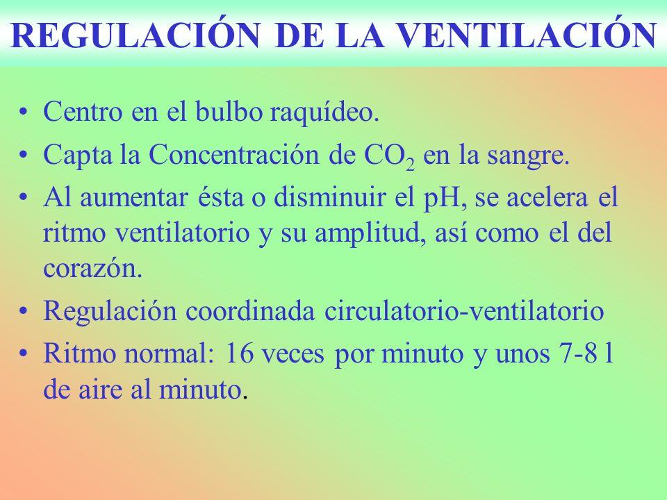 REGULACIÓN DE LA VENTILACIÓN Centro en el bulbo raquídeo.