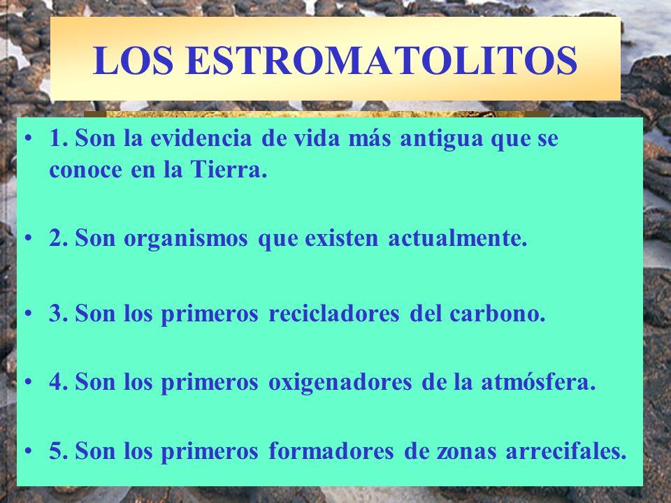 LOS ESTROMATOLITOS 1. Son la evidencia de vida más antigua que se conoce en la Tierra. 2. Son organismos que existen actualmente. 3. Son los primeros