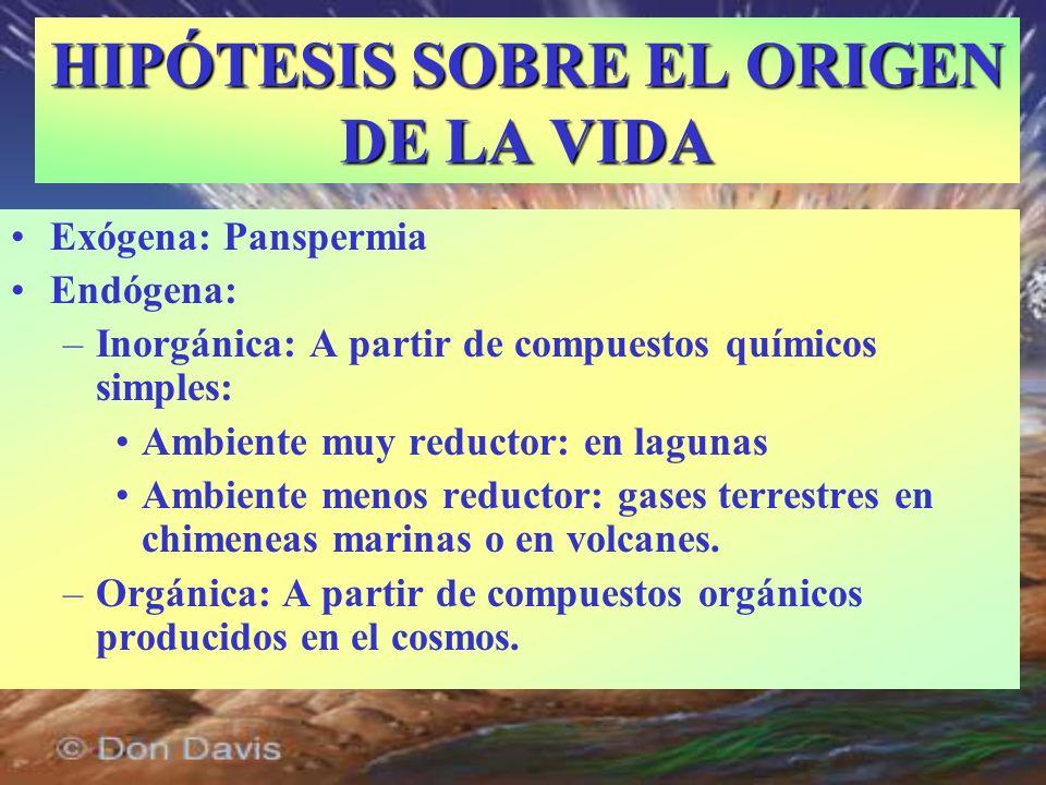 Exógena: Panspermia Endógena: –Inorgánica: A partir de compuestos químicos simples: Ambiente muy reductor: en lagunas Ambiente menos reductor: gases t