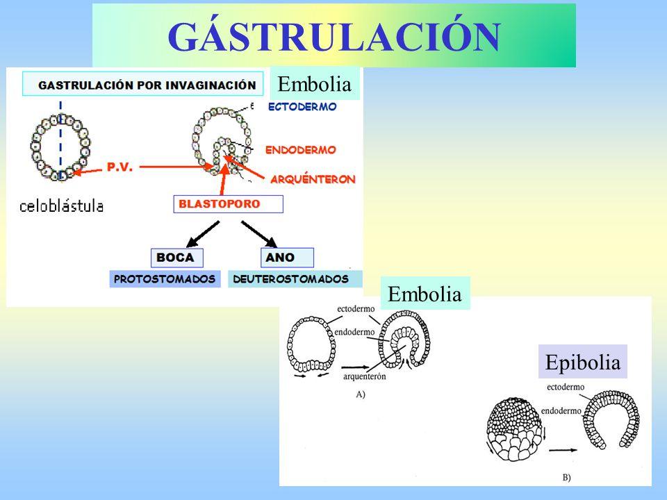 GÁSTRULACIÓN Embolia Epibolia Embolia