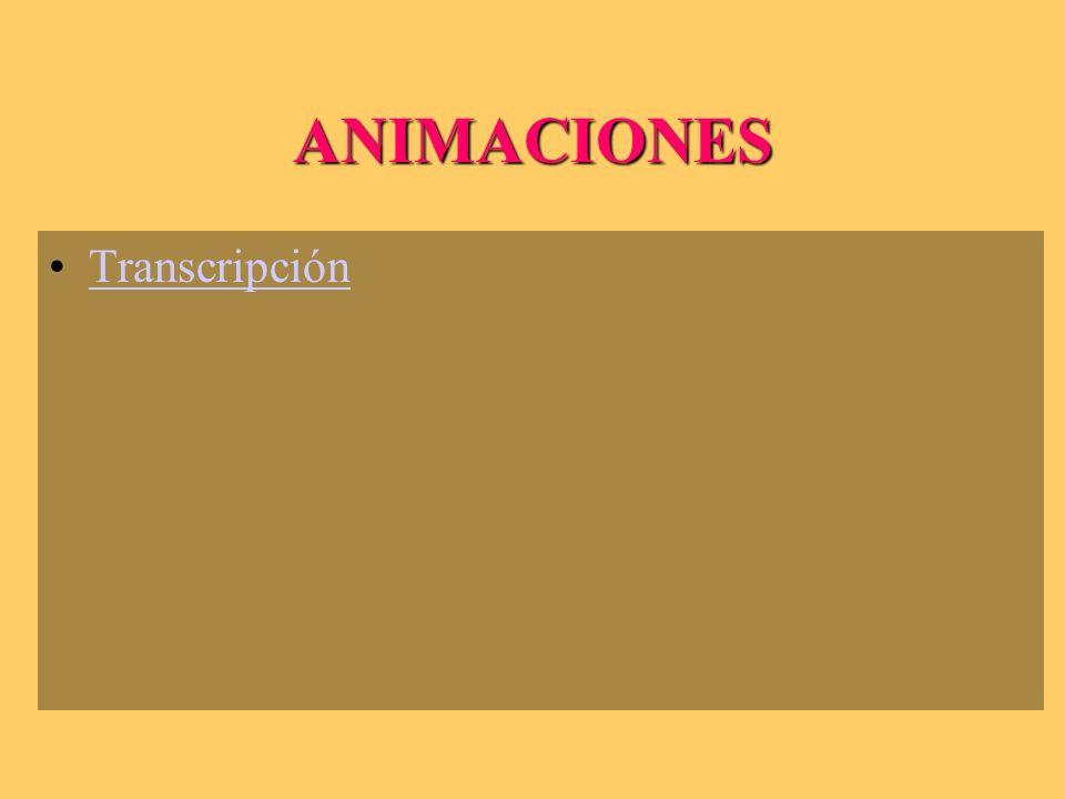 ANIMACIONES Transcripción