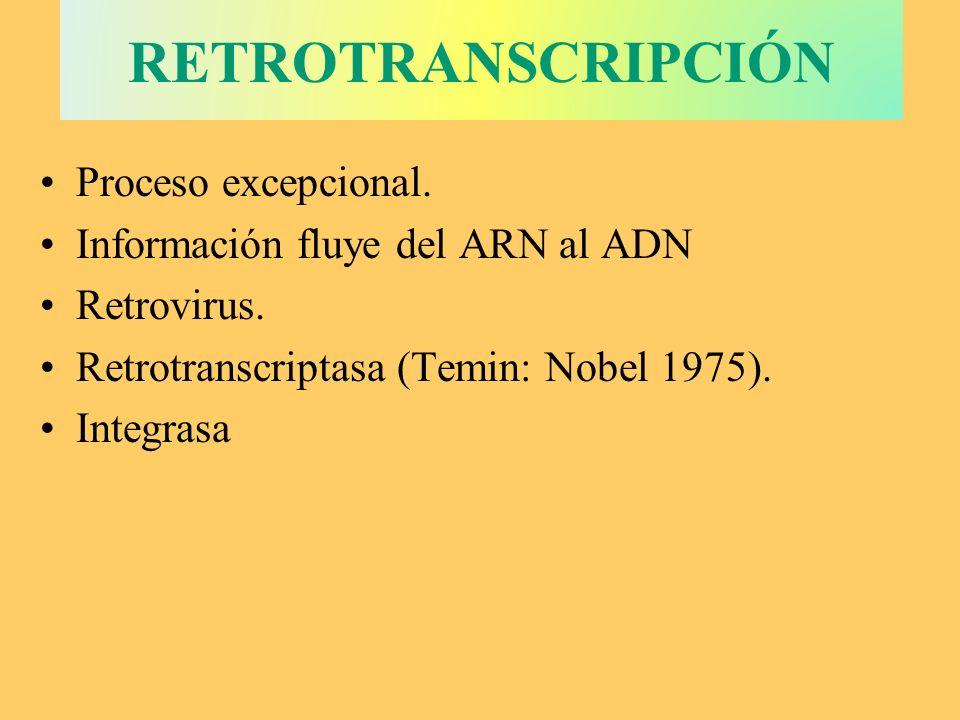 CÓDIGO GENÉTICO Establece la relación entre la secuencia de bases nitrogenadas del ARN m con la secuencia de aminoácidos de las proteínas.