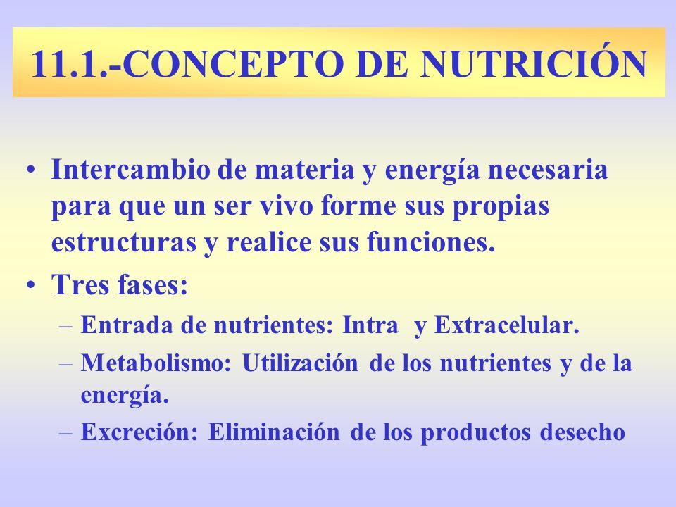 Intercambio de materia y energía necesaria para que un ser vivo forme sus propias estructuras y realice sus funciones. Tres fases: –Entrada de nutrien