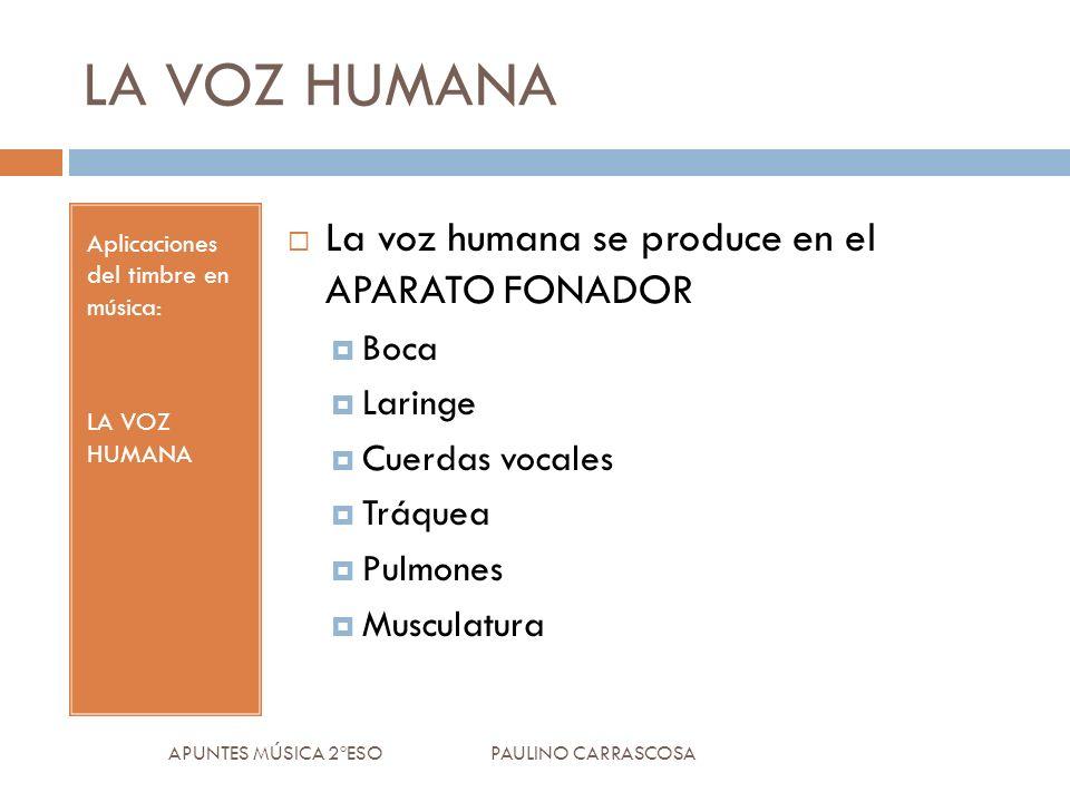 LA VOZ HUMANA Aplicaciones del timbre en música: LA VOZ HUMANA La voz humana se produce en el APARATO FONADOR Boca Laringe Cuerdas vocales Tráquea Pulmones Musculatura APUNTES MÚSICA 2ºESO PAULINO CARRASCOSA