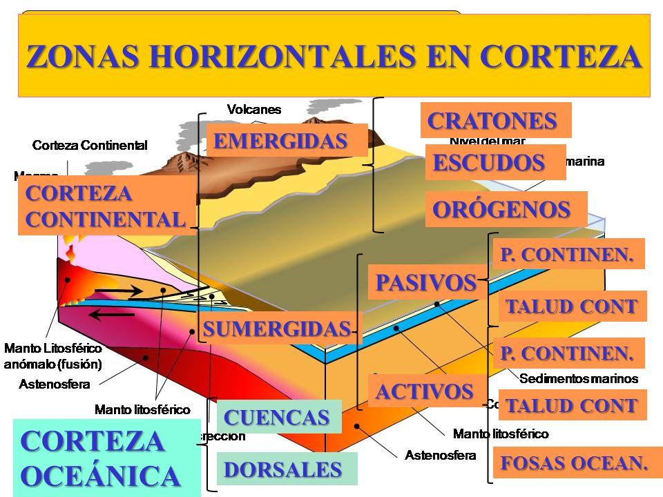 ZONAS HORIZONTALES EN CORTEZA CORTEZA OCEÁNICA CORTEZA CONTINENTAL EMERGIDAS SUMERGIDAS ACTIVOS ORÓGENOS ESCUDOS CRATONES PASIVOS P. CONTINEN. TALUD C