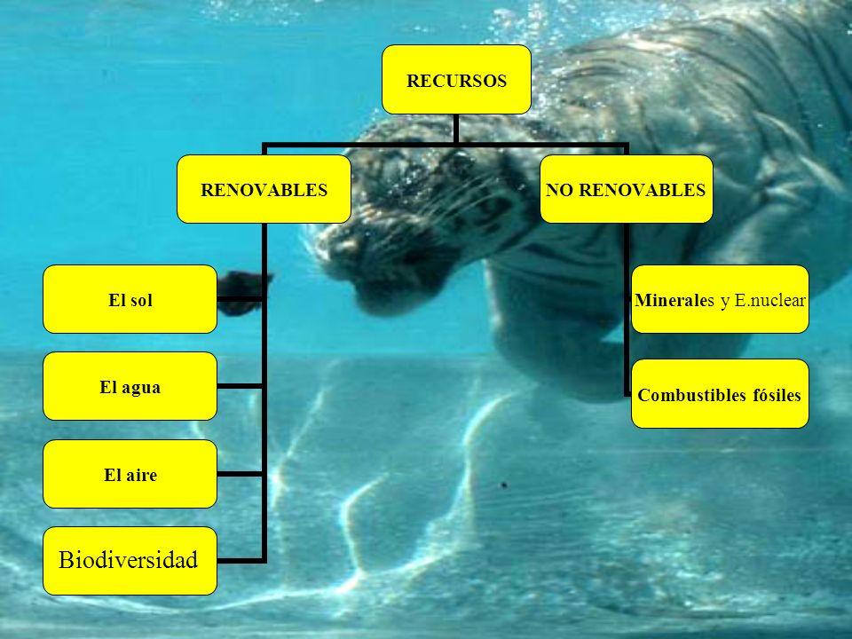 RECURSOS RENOVABLES El solEl aguaEl aireAnimales y plantas NO RENOVABLES Combustibles fósiles Minerales y E.nuclear Biodiversidad
