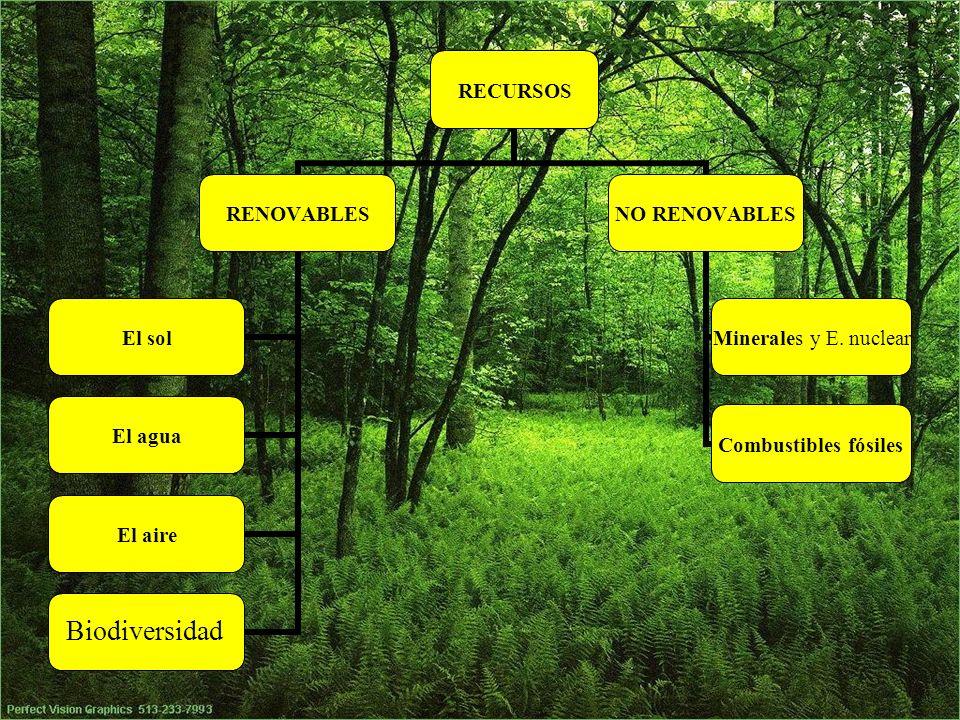 RECURSOS RENOVABLES El solEl aguaEl aireAnimales y plantas NO RENOVABLES Combustibles fósiles Minerales y E. nuclear Biodiversidad
