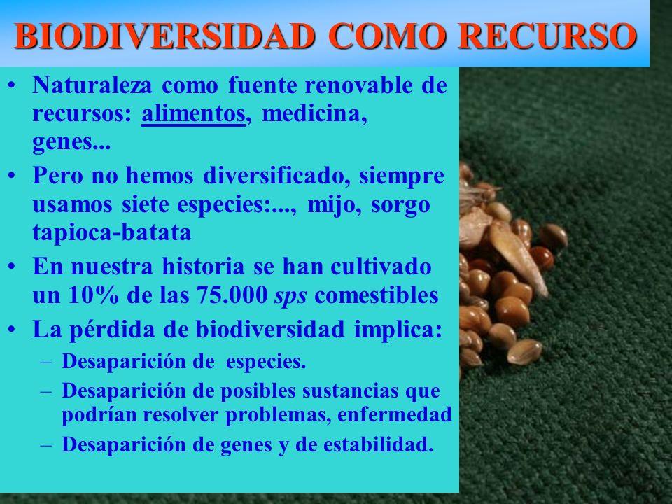 BIODIVERSIDAD COMO RECURSO Semillas de cereales: Trigo, arroz, maíz, sorgo, cebada Naturaleza como fuente renovable de recursos: alimentos, medicina,