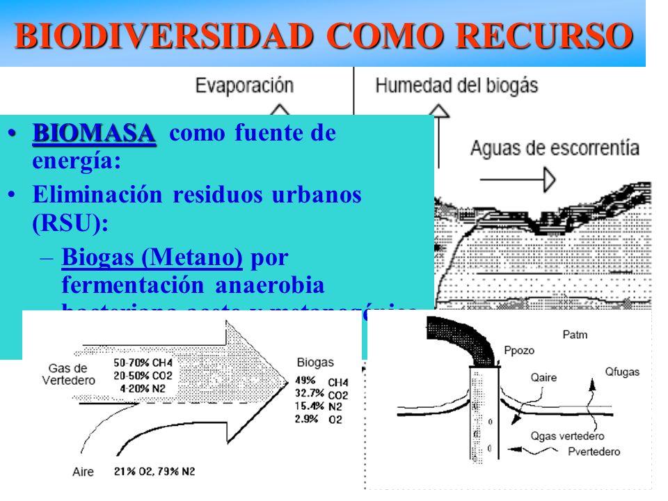 BIODIVERSIDAD COMO RECURSO RSU BIOMASABIOMASA como fuente de energía: Eliminación residuos urbanos (RSU): –Biogas (Metano) por fermentación anaerobia