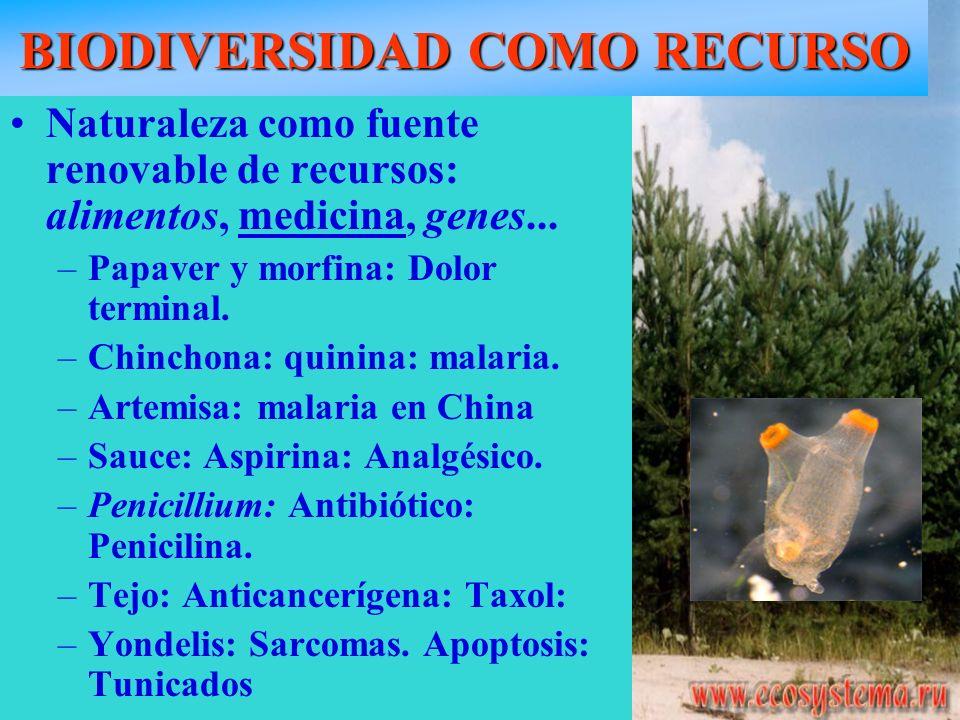 BIODIVERSIDAD COMO RECURSO Naturaleza como fuente renovable de recursos: alimentos, medicina, genes... –Papaver y morfina: Dolor terminal. –Chinchona: