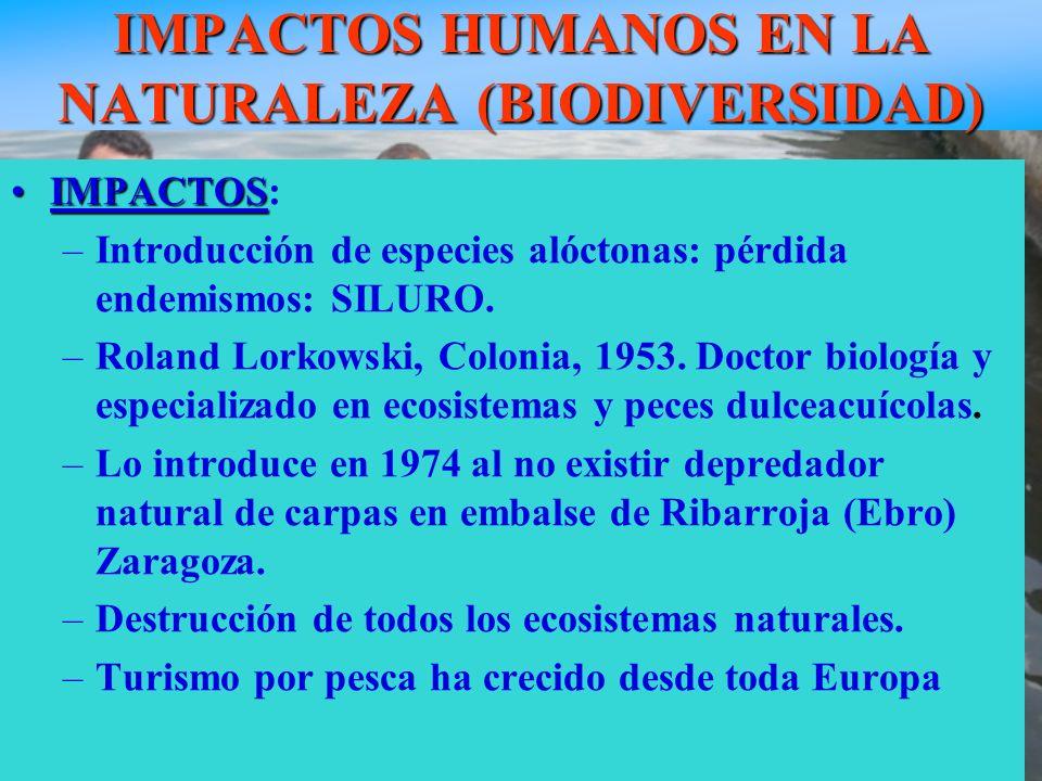 IMPACTOS HUMANOS EN LA NATURALEZA (BIODIVERSIDAD) Pez siluro de más de 100 Kg. IMPACTOSIMPACTOS: –Introducción de especies alóctonas: pérdida endemism