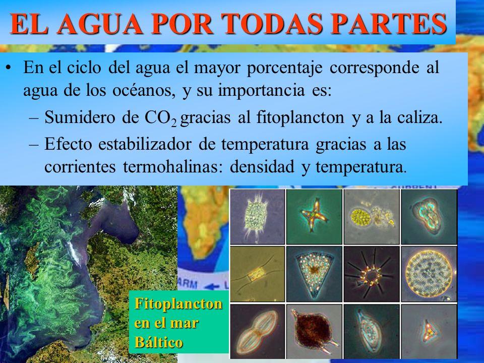 EL AGUA POR TODAS PARTES En el ciclo del agua el mayor porcentaje corresponde al agua de los océanos, y su importancia es: –Sumidero de CO 2 gracias a