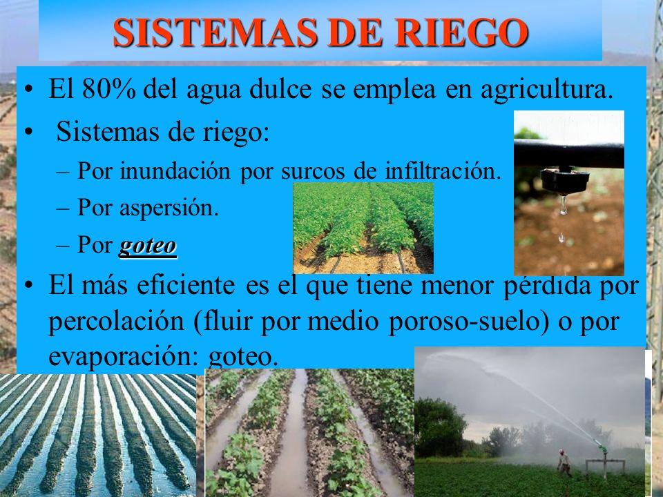 SISTEMAS DE RIEGO Goteo en olivar El 80% del agua dulce se emplea en agricultura. Sistemas de riego: –Por inundación por surcos de infiltración. –Por