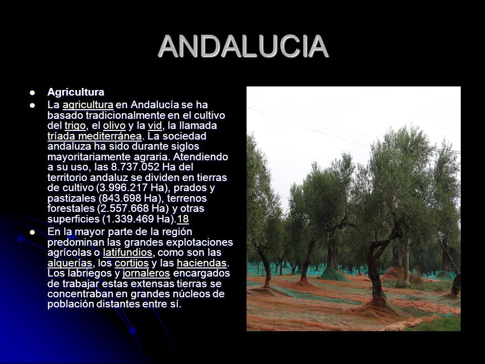 ANDALUCIA Agricultura Agricultura La agricultura en Andalucía se ha basado tradicionalmente en el cultivo del trigo, el olivo y la vid, la llamada trí