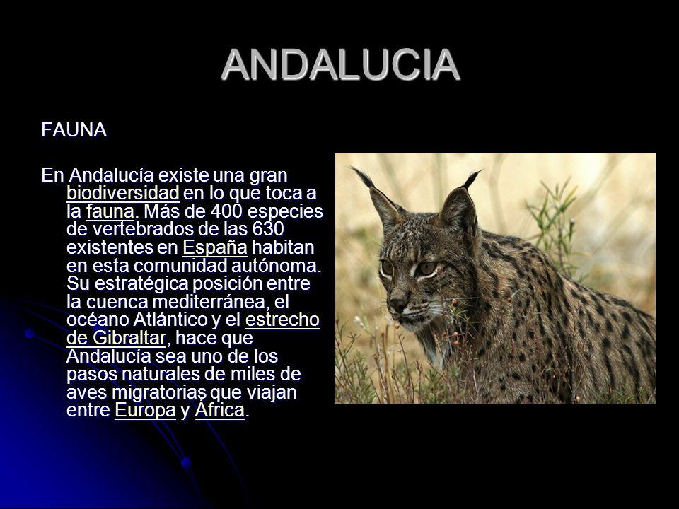 ANDALUCIA FAUNA En Andalucía existe una gran biodiversidad en lo que toca a la fauna. Más de 400 especies de vertebrados de las 630 existentes en Espa