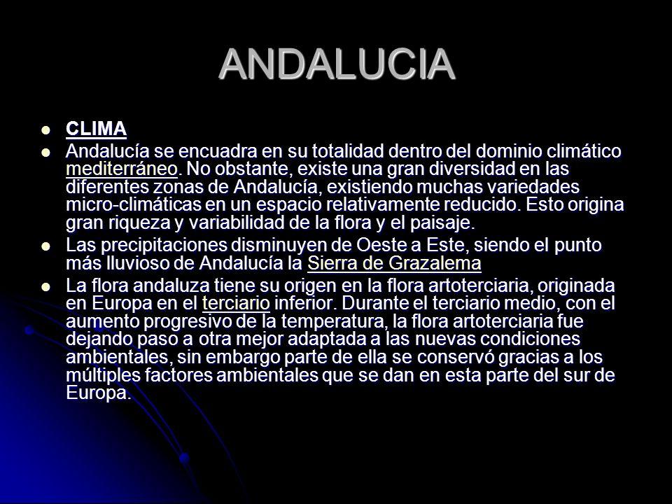 ANDALUCIA CLIMA CLIMA Andalucía se encuadra en su totalidad dentro del dominio climático mediterráneo. No obstante, existe una gran diversidad en las
