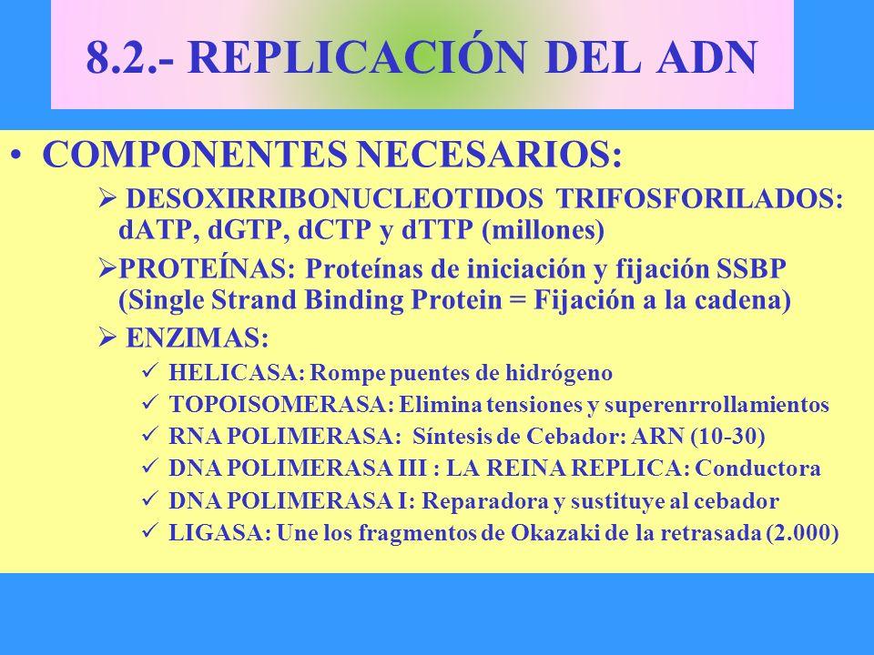 8.2.- REPLICACIÓN DEL ADN COMPONENTES NECESARIOS: DESOXIRRIBONUCLEOTIDOS TRIFOSFORILADOS: dATP, dGTP, dCTP y dTTP (millones) PROTEÍNAS: Proteínas de i