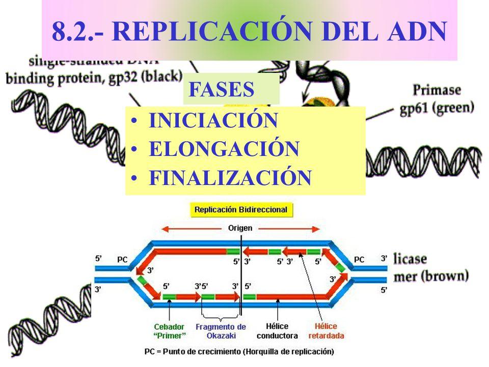 8.2.- REPLICACIÓN DEL ADN INICIACIÓN ELONGACIÓN FINALIZACIÓN FASES