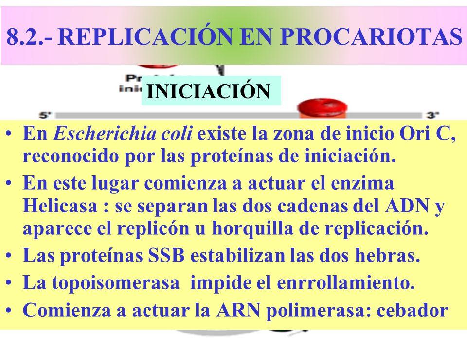 8.2.- REPLICACIÓN EN PROCARIOTAS En Escherichia coli existe la zona de inicio Ori C, reconocido por las proteínas de iniciación. En este lugar comienz