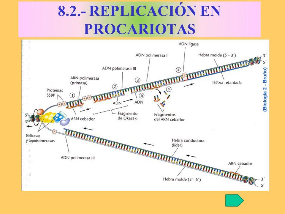 8.2.- REPLICACIÓN EN PROCARIOTAS