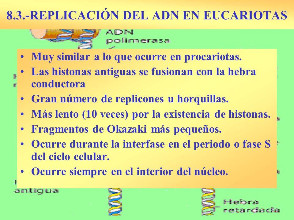 8.3.-REPLICACIÓN DEL ADN EN EUCARIOTAS Muy similar a lo que ocurre en procariotas. Las histonas antiguas se fusionan con la hebra conductora Gran núme