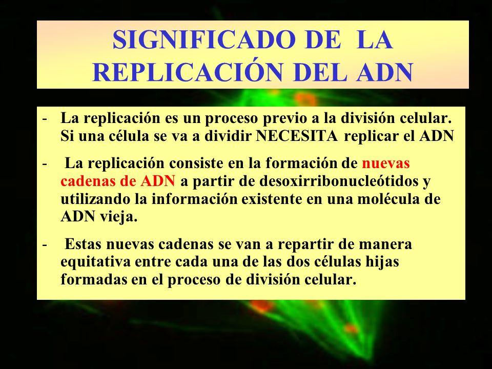 -La replicación es un proceso previo a la división celular. Si una célula se va a dividir NECESITA replicar el ADN - La replicación consiste en la for