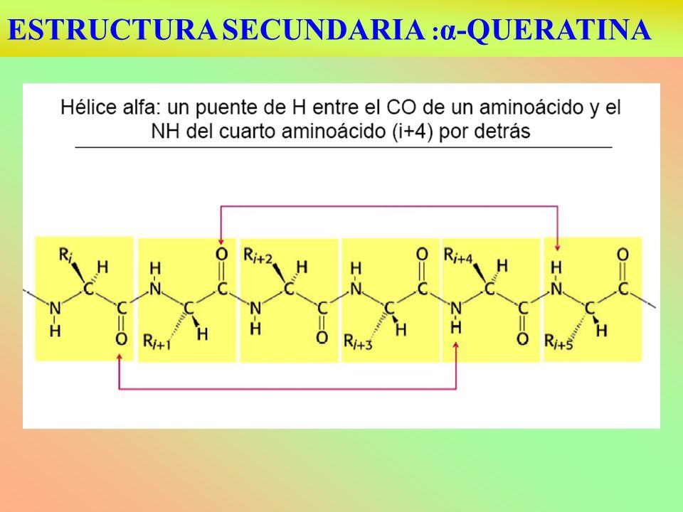 ESTRUCTURA SECUNDARIA : α-QUERATINA