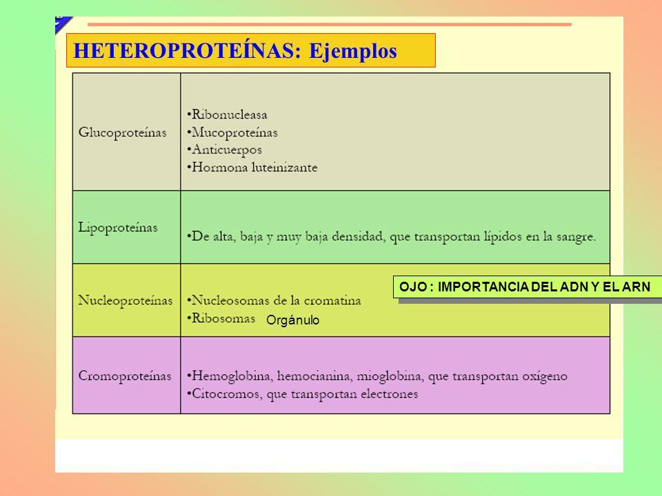 OJO : IMPORTANCIA DEL ADN Y EL ARN Orgánulo HETEROPROTEÍNAS: Ejemplos