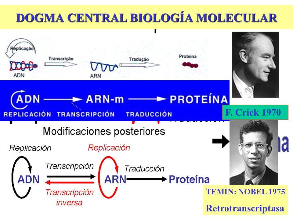 DOGMA CENTRAL BIOLOGÍA MOLECULAR TEMIN: NOBEL 1975 Retrotranscriptasa F. Crick 1970