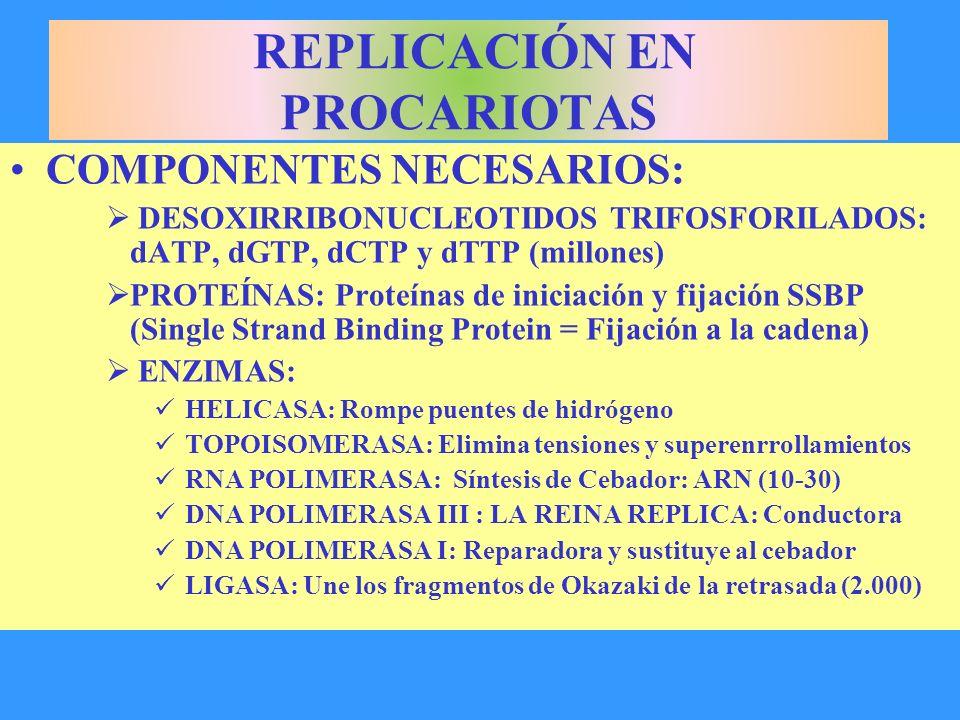 COMPONENTES NECESARIOS: DESOXIRRIBONUCLEOTIDOS TRIFOSFORILADOS: dATP, dGTP, dCTP y dTTP (millones) PROTEÍNAS: Proteínas de iniciación y fijación SSBP