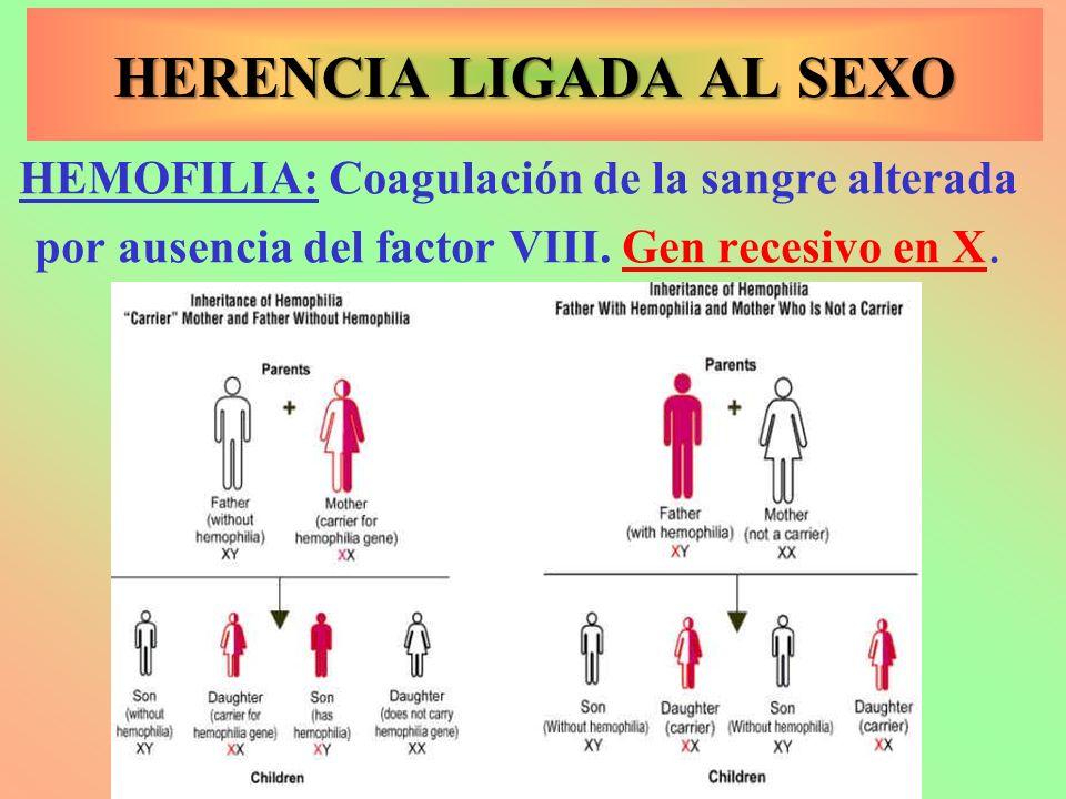 HEMOFILIA: Coagulación de la sangre alterada por ausencia del factor VIII. Gen recesivo en X. HERENCIA LIGADA AL SEXO