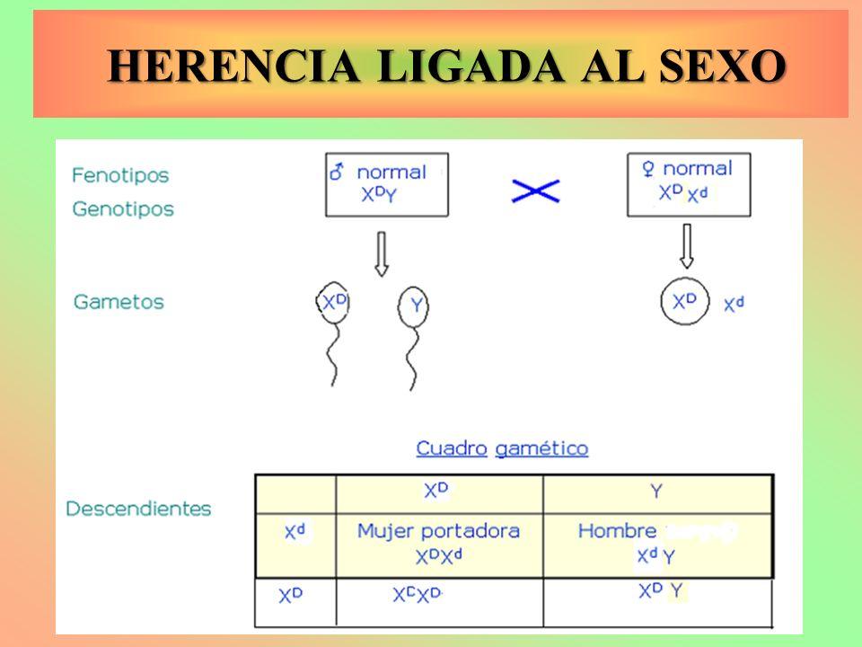 HERENCIA LIGADA AL SEXO HERENCIA LIGADA AL SEXO
