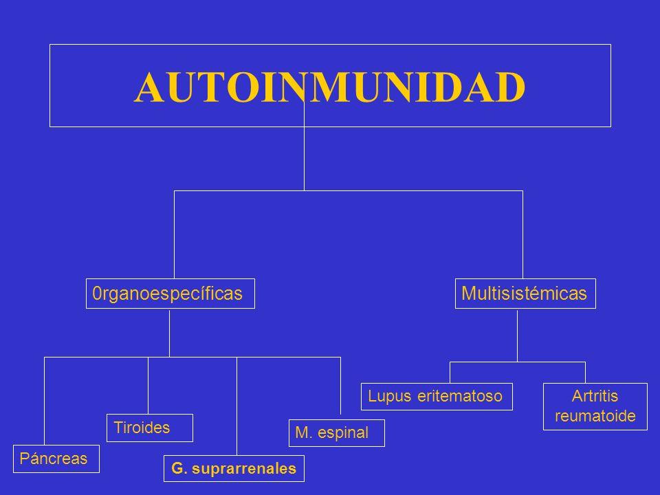 AUTOINMUNIDAD La autoinmunidad es el fracaso de la tolerancia: lo propio es reconocido como extraño. La enfermedad autoinmune se presenta cuando apare