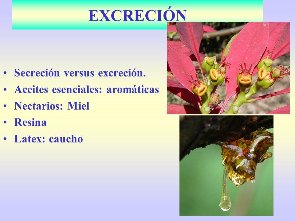 Secreción versus excreción. Aceites esenciales: aromáticas Nectarios: Miel Resina Latex: caucho EXCRECIÓN